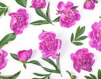 Floral pattern made of pink peony flowers and leaves isolated on white background. Flat lay. Top view stock photography