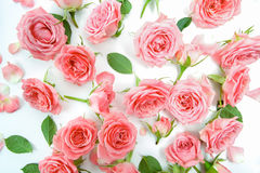 Floral pattern made of pink roses, green leaves, branches on white background. Flat lay, top view. Floral pattern. Stock Image