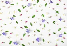 Floral pattern made of spring flowers, lilac wildflowers, pink buds and leaves isolated on white background. Flat lay. Top view royalty free stock images
