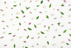 Floral pattern made of spring flowers, pink buds and leaves isolated on white background. Flat lay. Top view Royalty Free Stock Photography