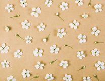 Floral pattern made of white spring flowers and buds on brown paper background. Flat lay. Top view Royalty Free Stock Images