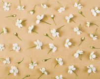Floral pattern made of white spring flowers and buds on brown paper background. Flat lay. Top view Royalty Free Stock Image
