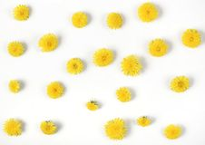 Floral pattern made of yellow dandelion flowers isolated on white background. Flat lay. Top view stock images