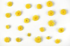 Floral pattern made of yellow dandelion flowers isolated on white background. Flat lay. Top view royalty free stock photography