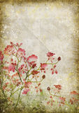 Floral pattern on old paper Royalty Free Stock Photo
