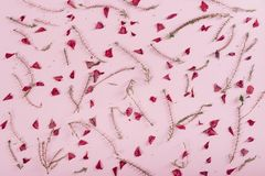 Floral pattern on pink background. Stock Photos