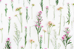Floral pattern with pink and beige wildflowers, green leaves, branches on white background. Flat lay, top view. Valentine`s background royalty free stock images