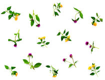 Floral pattern with pink clover and yellow wildflowers on white background. Flat lay, top view. Royalty Free Stock Photos