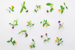 Floral pattern with pink clover and yellow wildflowers on white background. Flat lay, top view. Stock Photography