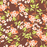Floral pattern with pink flowers Stock Image