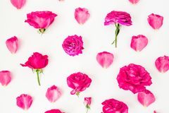 Floral pattern with pink rose flowers and petals on white background. Flat lay, Top view. Flowers texture. royalty free stock photos