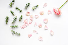 Floral pattern with rose petals and eucalyptus on white table top view Stock Image
