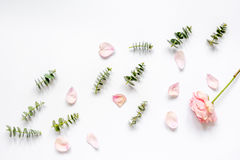 Floral pattern with rose petals and eucalyptus on white table top view Stock Photos