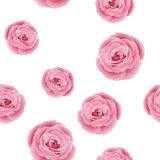 Floral pattern with rose Royalty Free Stock Image