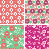 Floral pattern  seamless blossom cherry Royalty Free Stock Photography