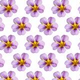 Floral pattern. Seamless pattern of magic pink Superbells Evening Star flowers Stock Photos