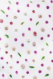 Floral pattern wallpaper. isolated on white Royalty Free Stock Images