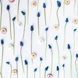Floral pattern wallpaper. muscari, chamomile Stock Photos