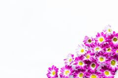 Floral pattern with pink flowers on white background top view copyspace Stock Photography