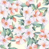 Floral pattern. White flowers. Hand drawn watercolor floral seamless pattern Royalty Free Stock Image