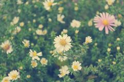 Floral pattern - white and pink flowers with green bushy leaves. Toned image with shallow depth of focus Stock Photography