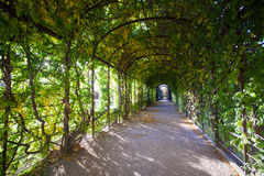 Floral pavilion. Floral pergola with leaves on the walls and ceiling Royalty Free Stock Image