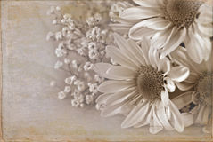 Floral Pick Stock Photography