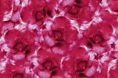 Floral  pink background from roses.  Flower composition. Flowers with water droplets on petals. Close-up. Stock Images