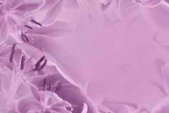 Floral  pink beautiful background.  Flower composition  of   flowers Lilies. Stock Images