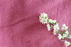 Floral pink cotton fabric Stock Photo