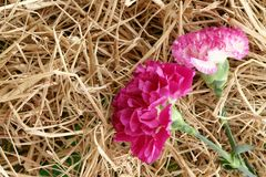 Floral pink flower straw thatch Royalty Free Stock Images