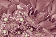 Floral pink-pearl background of flowers of dahlia. Bright flower arrangement. A bouquet  of  pink dahlias. Nature Royalty Free Stock Photo