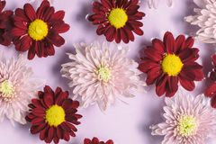 Floral pink and red flower background, flat lay. Royalty Free Stock Photos