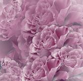 Floral   pink-white beautiful background.  Flower composition. Bouquet of flowers from  pink roses. Close-up. Nature Stock Photos