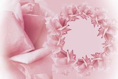 Floral  pink-white beautiful background.  Flower composition.   Frame of  pink  flowers roses  on  light pink background.  Rose cl Stock Photos