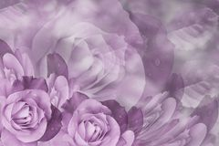 Floral  pink-white beautiful background.  Flower composition  of  roses  flowers.  Close-up. Nature Stock Images