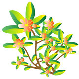 Floral plant. Illustration Royalty Free Stock Images