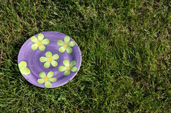 Floral plate on the grass Stock Images