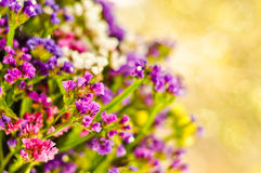 Floral postcard Royalty Free Stock Images