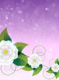 Floral purple  background Stock Photos