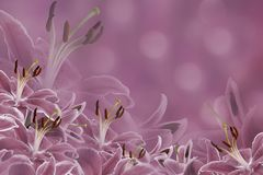 Floral purple background. Lily flowers on a blurred bokeh background. Flower composition. Stock Photos