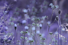 Floral  purple-blue background. Violet wildflowers on a  bokeh background. Close-up.  Soft focus Stock Photo