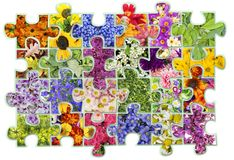 Floral puzzles  abstract concept. Abstract collage -  floral flowers plants  puzzles concept background. Contains patches Stock Photos