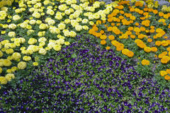 Floral Pyramid Royalty Free Stock Photo