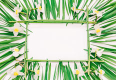 Floral rectangular frame of yellow flowers of daffodils and green leaves on white background with space for text Royalty Free Stock Photos