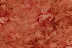 Floral  red beautiful background. Wallpapers of flowers red peony. Flower composition. Close-up. Nature Royalty Free Stock Photography