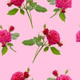 Floral red rose seamless pattern Royalty Free Stock Photography