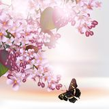 Floral romantic background with lilac flowers Stock Images