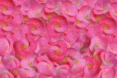 Floral rosado Foto de archivo libre de regalías