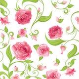 Floral rose illustration stock